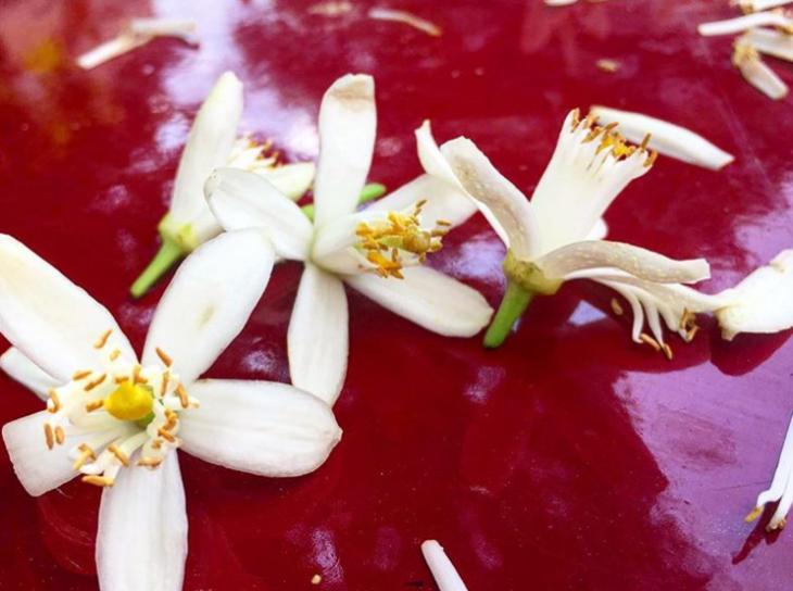 Portakal Çiçeği Pestivali 5 Nisan Etkinlik Takvimi